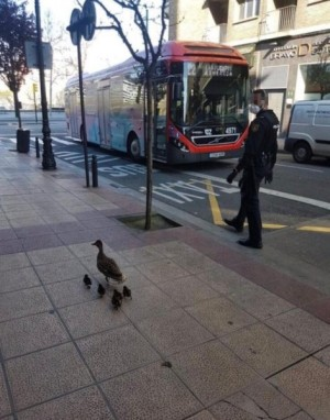Foto patos-policía
